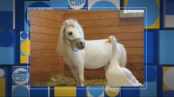 Horse and goose BFFs find forever home