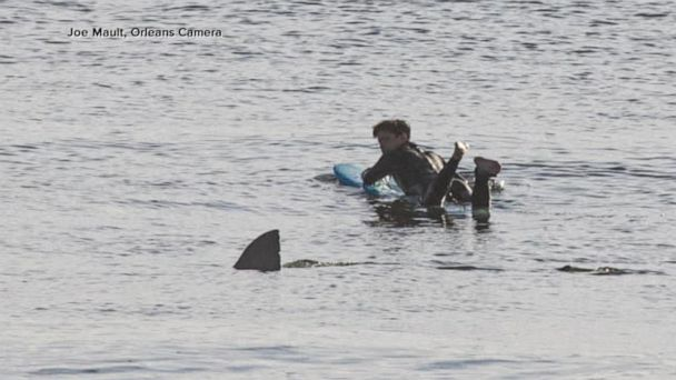 Surfer who was swimming just feet away from a great white shark shares his story