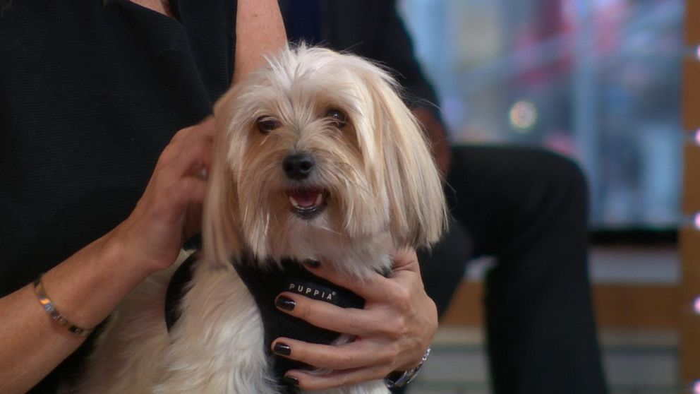 Owning a dog could provide long-term health benefits, study says