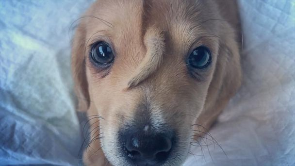 Rescue puppy named Narwhal has a tail on his forehead and is 'perfectly healthy'