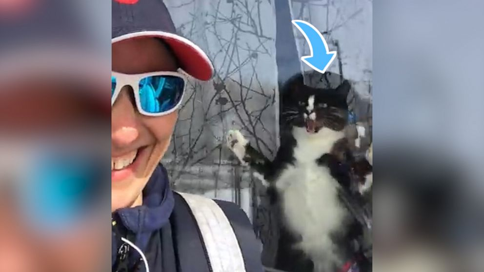 Guard cat jumps at postwoman every day and it's hilarious