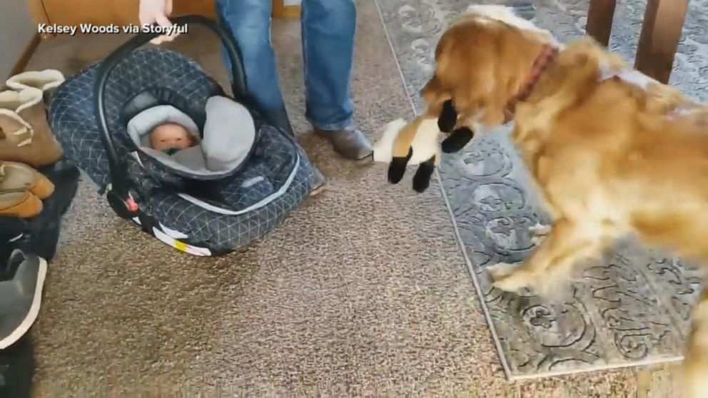 Dog's adorable reaction to newest member of household