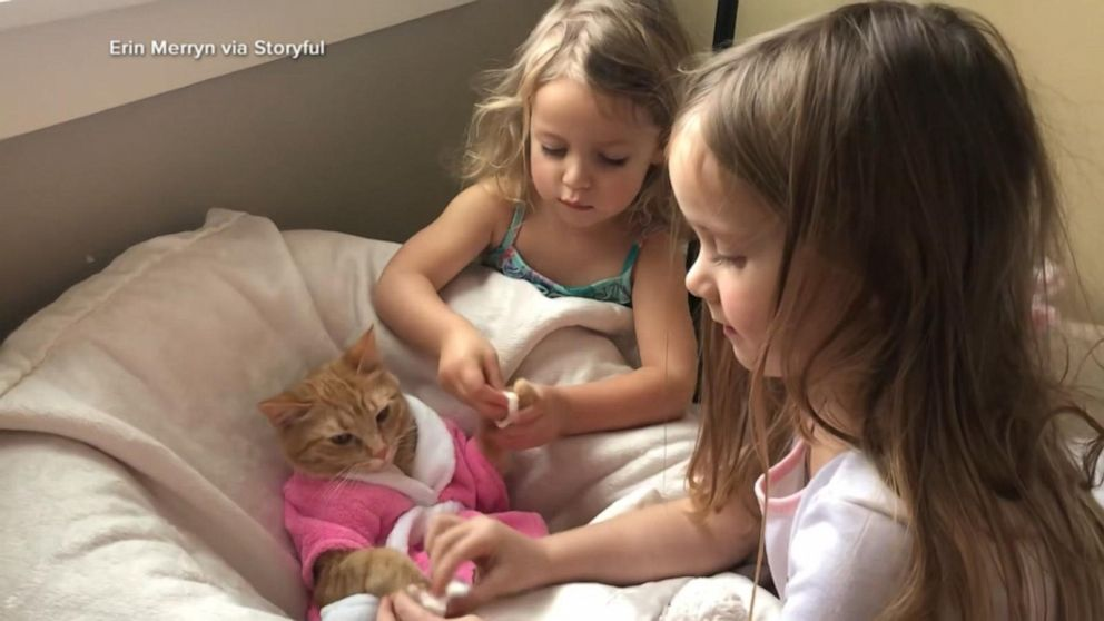 Cat enjoys spa treatment with help of 2 preschoolers