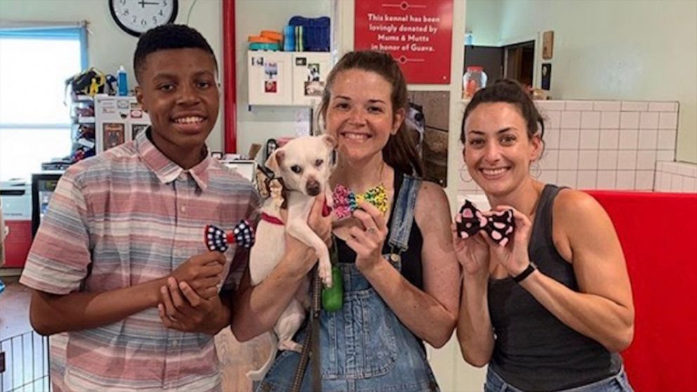 Boy sews bow ties in adorable effort to help shelter animals get adopted