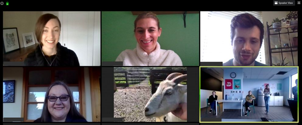 "PHOTO: Proceeds from Sweet Farm's ""Goat 2 Meetings"" fund free virtual learning opportunities for schools and other initiatives promoting sustainability."
