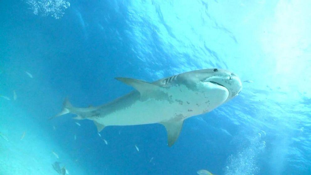 Man Dies After Shark Attack in Western Australia State