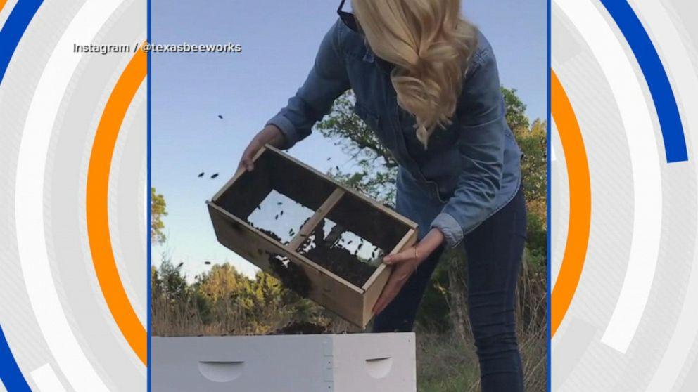 Beekeeper's viral videos create big buzz
