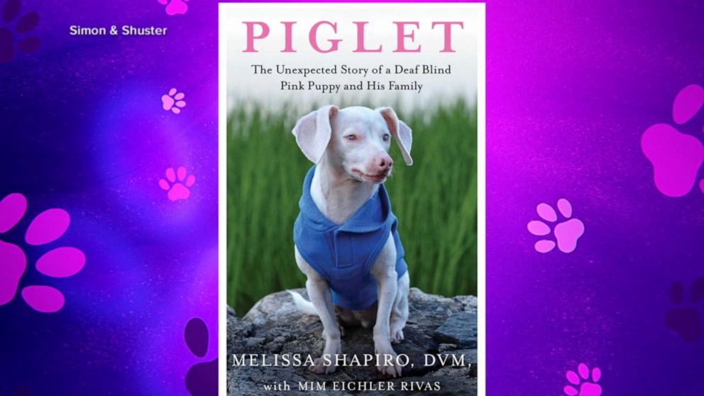 Unexpected story of Piglet, the deaf and blind puppy