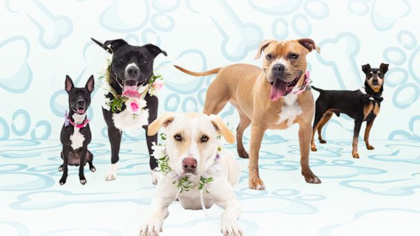 Rescue dogs star in sweet photo shoot to get adopted for National Pet Day