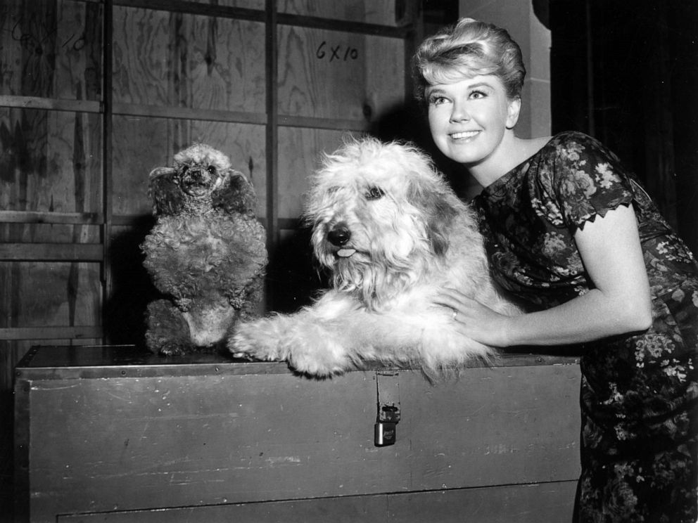 PHOTO: Doris Day with mutt co-star Hobo on the set of director Charles Walterss film, Please Dont Eat the Daisies.