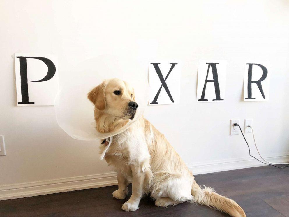 PHOTO: Gus poses as the Pixar lamp.