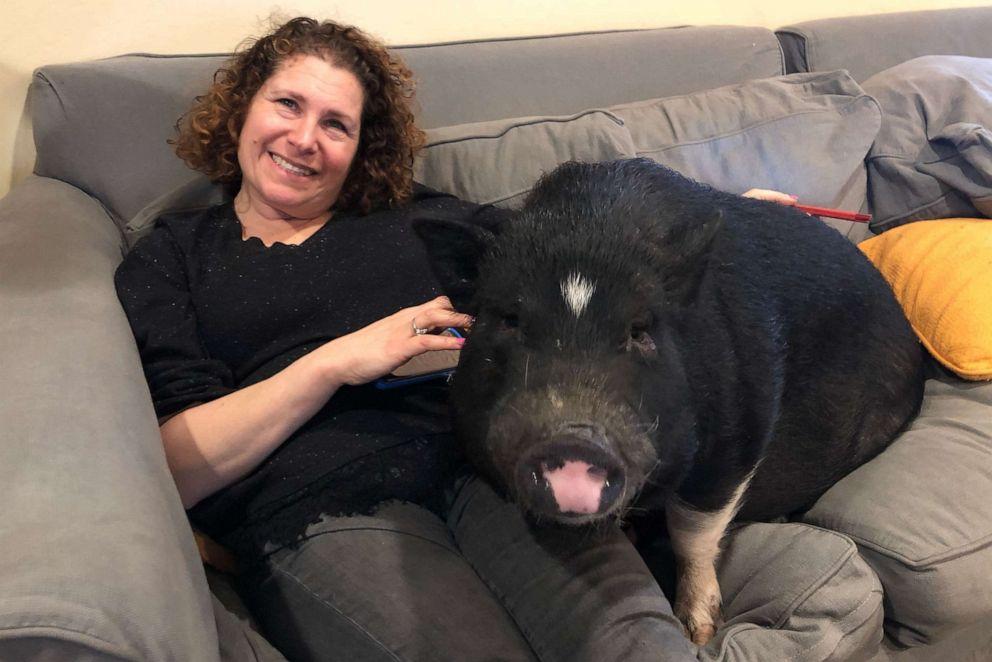 PHOTO: Hilary Gordon with their familys pet pig Squiggy.