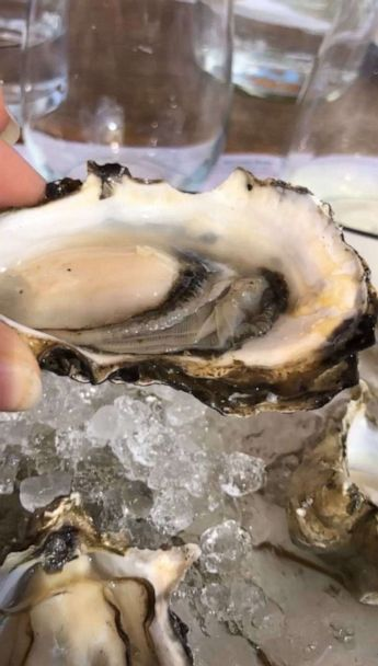 How oyster shells from NYC restaurants are recycled to