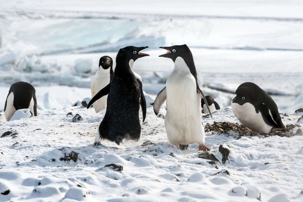 PHOTO: A scene from the movie PENGUINS.