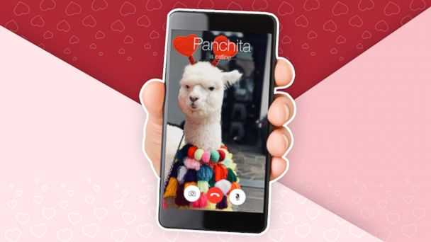 Give your Valentine a FaceTime from an Alpaca this Feb. 14