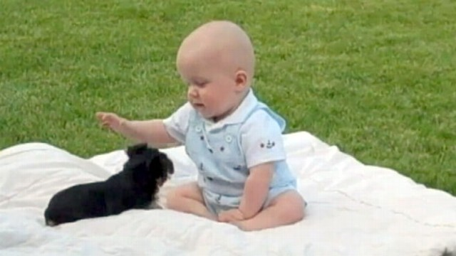 Baby Plays With Puppy Cutest Youtube Video Ever Video Abc News