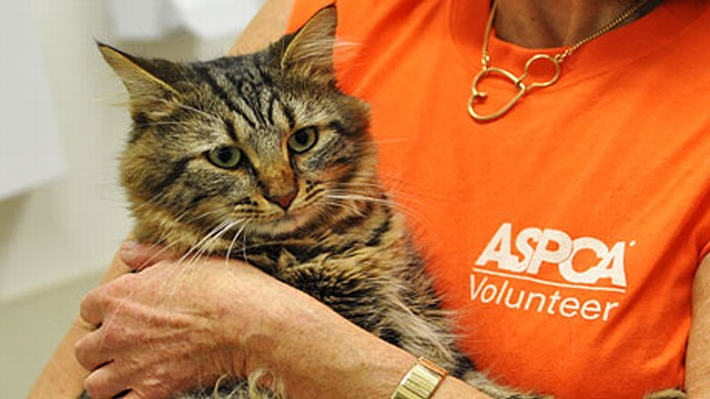 One Last Chance at a Home for Elderly Animals