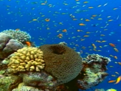 VIDEO: Greenhouse gases are destroying animals in the ocean.