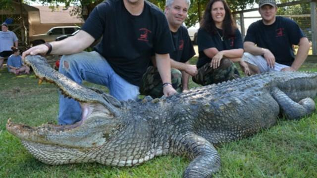 VIDEO: Record Alligator Caught at Mississippi Gator Hunt