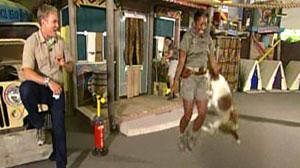 dog jumping rope
