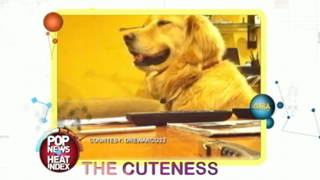Golden Retriever Jams To Guitar Until The Music Stops Video Abc