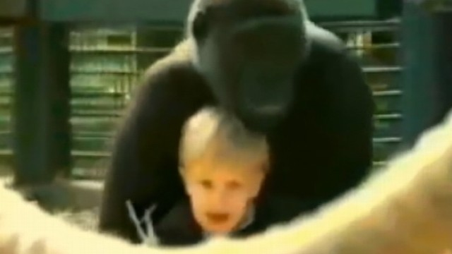 VIDEO: Damian Aspinall discusses a viral video of his daughter and a 300-pound gorilla.