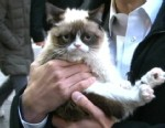 VIDEO: Grumpy Cat in Times Square