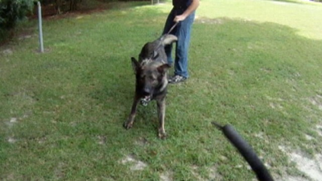 VIDEO: Matt Gutman checks out a training facility specializing in training guard dogs.