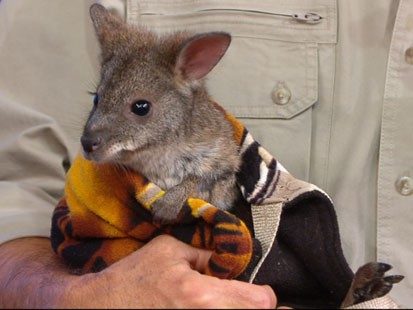 VIDEO: Jack Hanna stops by with porcupines, penguins and kangaroos.