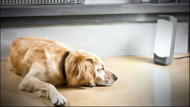 VIDEO: Dog Depression Treated with Laser Light Therapy