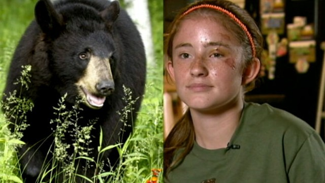 Bear Attacks on the Rise, Raising Safety Concerns