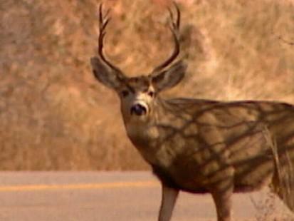 VIDEO: Buck Flies Through Car