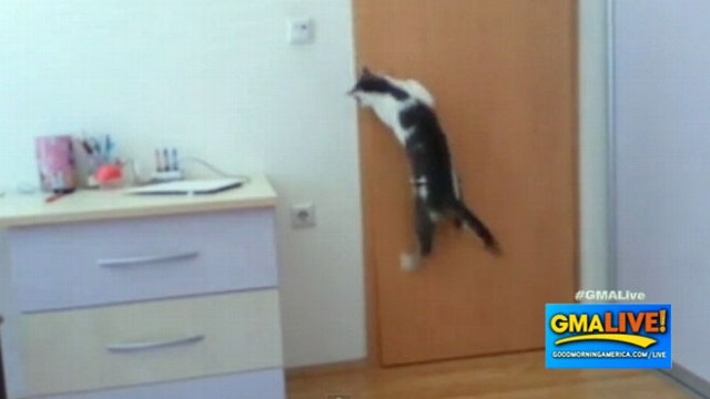 buffering & Clever Cat Opens Five Doors to Get Outside Video - ABC News