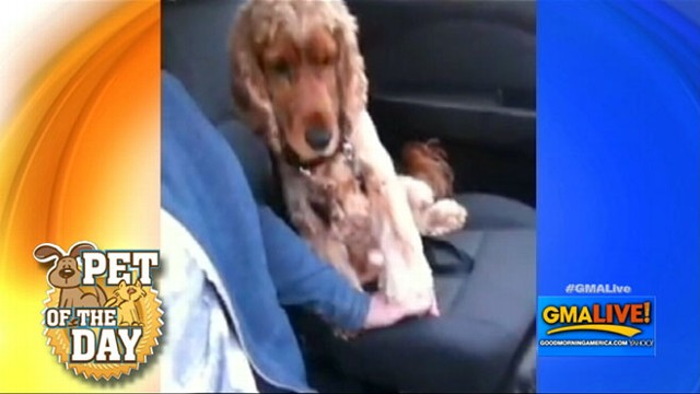 VIDEO: Nervous Dog Likes to Hold Hands in Car