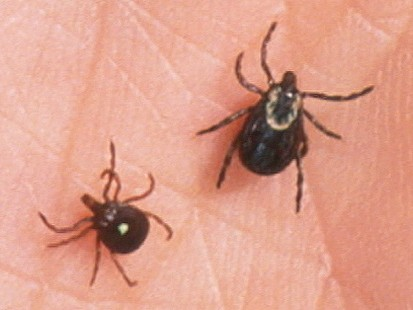 VIDEO: Can Lyme Disease Change Your Personality?