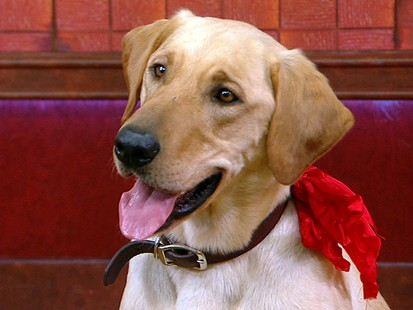 VIDEO: Clyde Star of Marley and Me