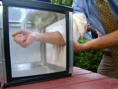 VIDEO: Michael Raupp, a professor of entomology, explains how to avoid those critters.
