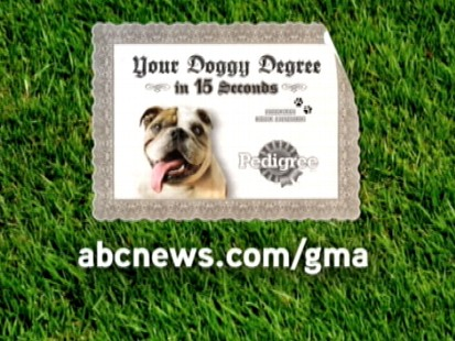 VIDEO: Find out how many times you should give your dog a bath.