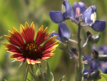 VIDEO: Weekend Window to Central Texas