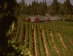 VIDEO: Visit Sonoma Wine Country