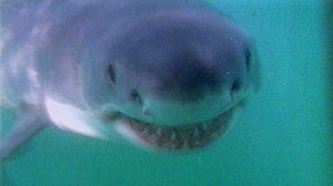 Summer of Shark Sightings
