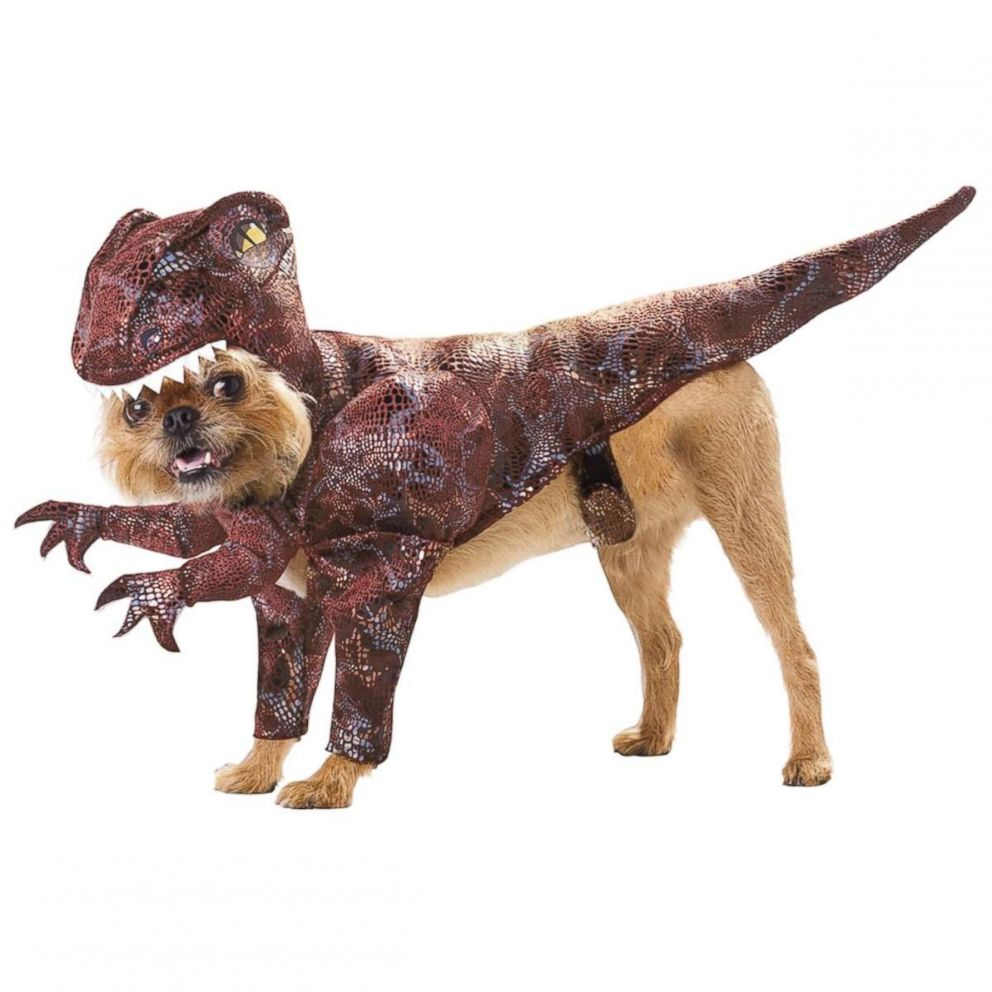 PHOTO: Animal Planet Raptor Pet Costume