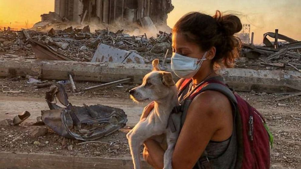 Animal rescue group reunites pets with owners after Beirut explosion
