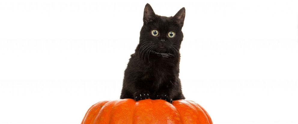 13 black cats on Instagram you'll want to follow this ...