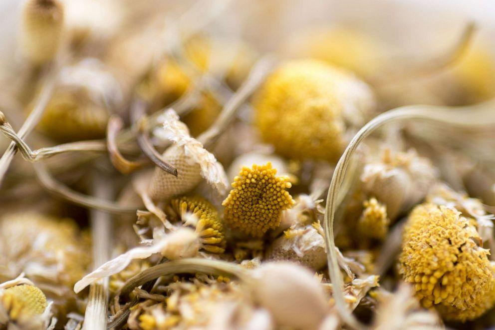 PHOTO: Chamomile herb buds.