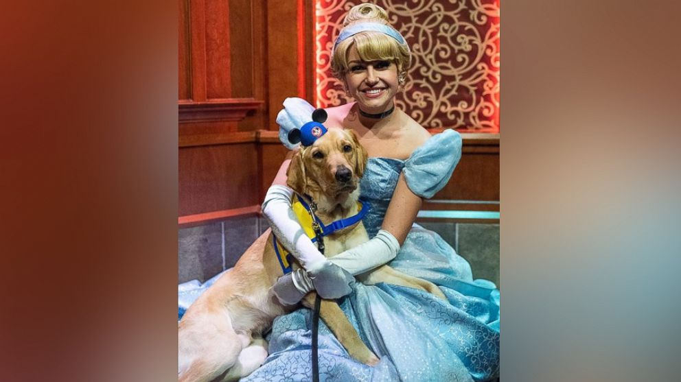 PHOTO: Ashley Wilt of Colorado, shared footage of Elijah, her service dog-in-training, onto Instagram as he met Cinderella at Disneyland.