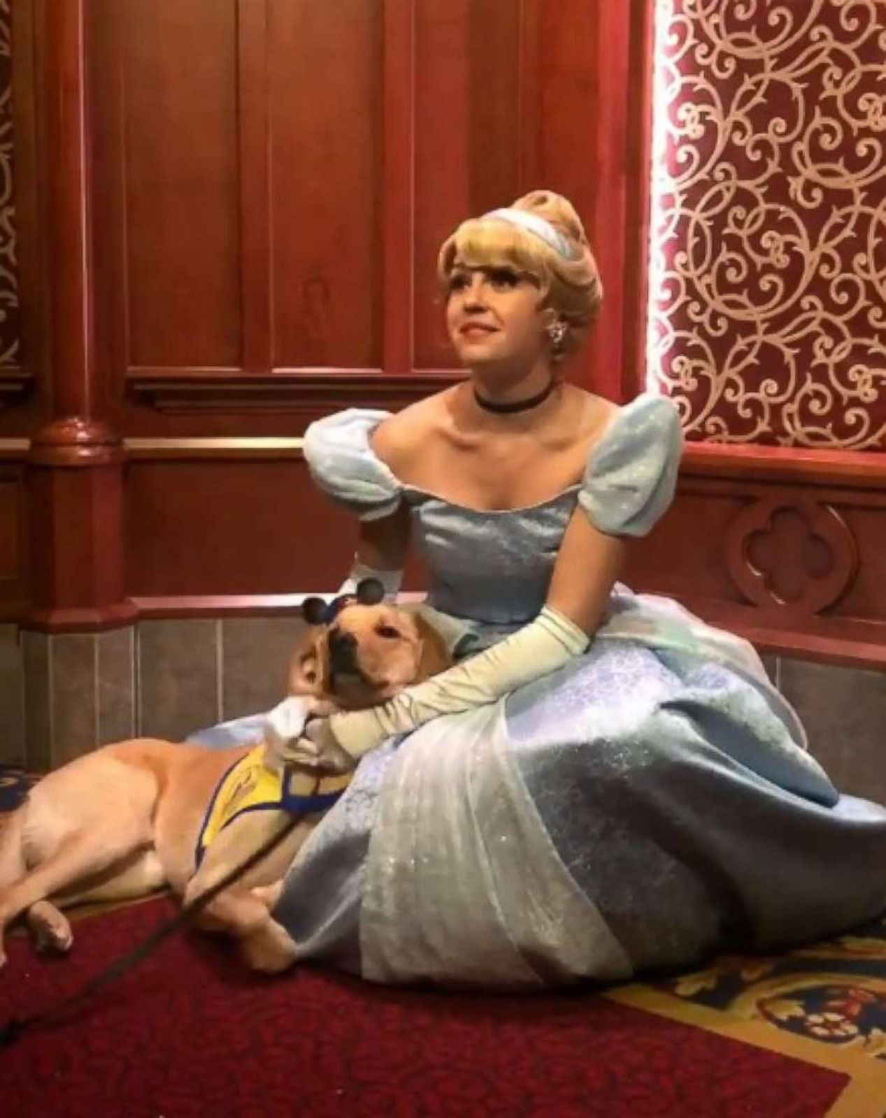 PHOTO: Elijah, a Labrador and Golden Retriever mix and service dog in training, vacationed at Disneyland in Anaheim, California, with his handler in December.