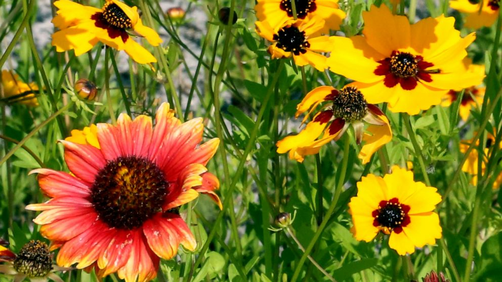 PHOTO: Two-thirds of the facility is pollinator-friendly and features a test garden to help environmental research.