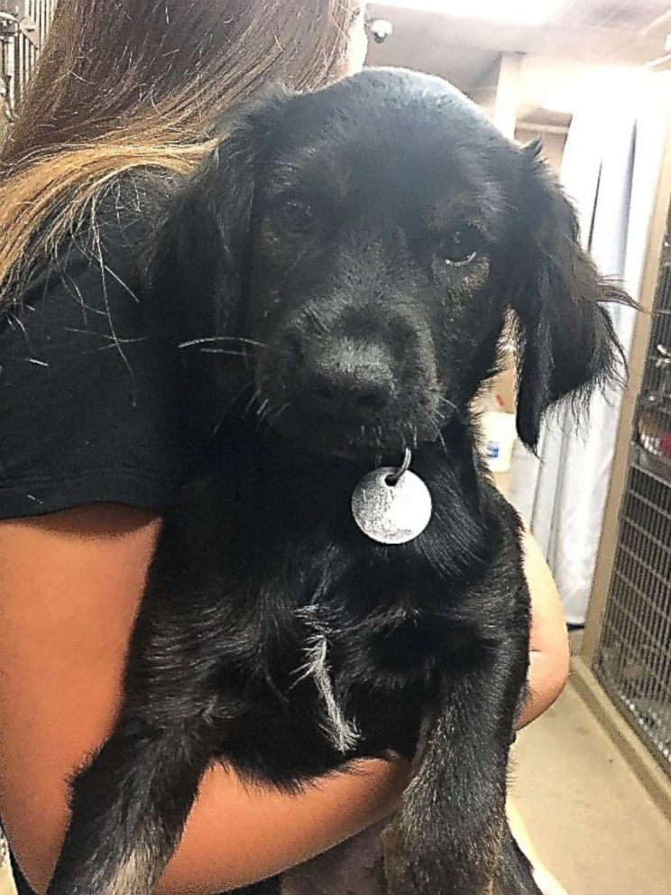 PHOTO: Maxx, a Labrador-terrier mix rescued from Tennessee, pictured in an undated handout image, is available for adoption from the North Shore Animal League.