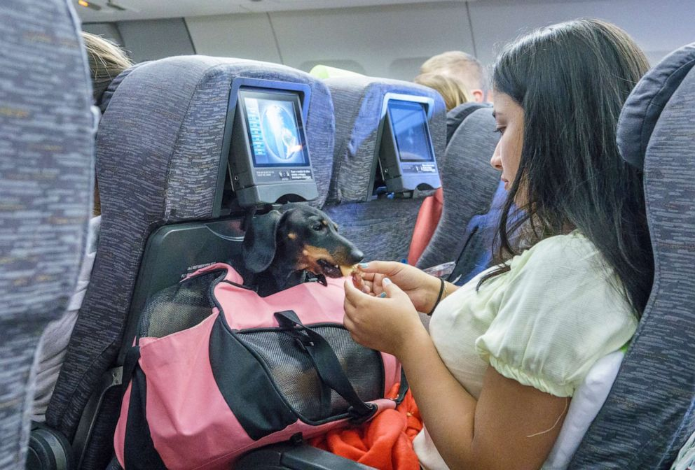 PHOTO: A passenger feeds a pet dog in its carrier.